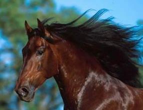 Nieuwe wormbestrijding voor elk paard