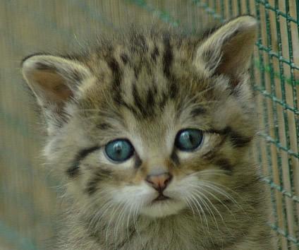 Kittens vaak wormen